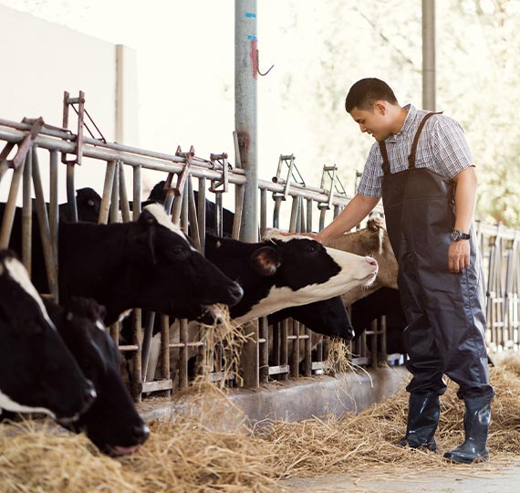 dairy-farming-about